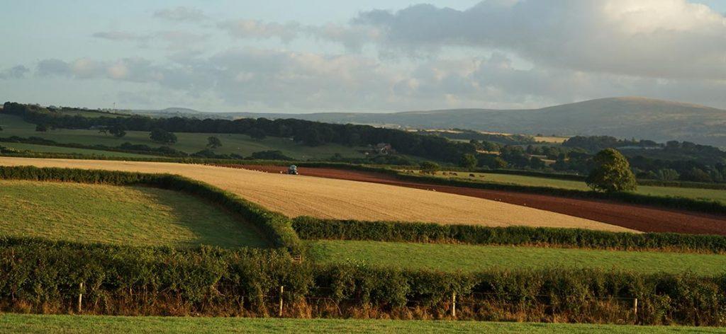 North Tawton View
